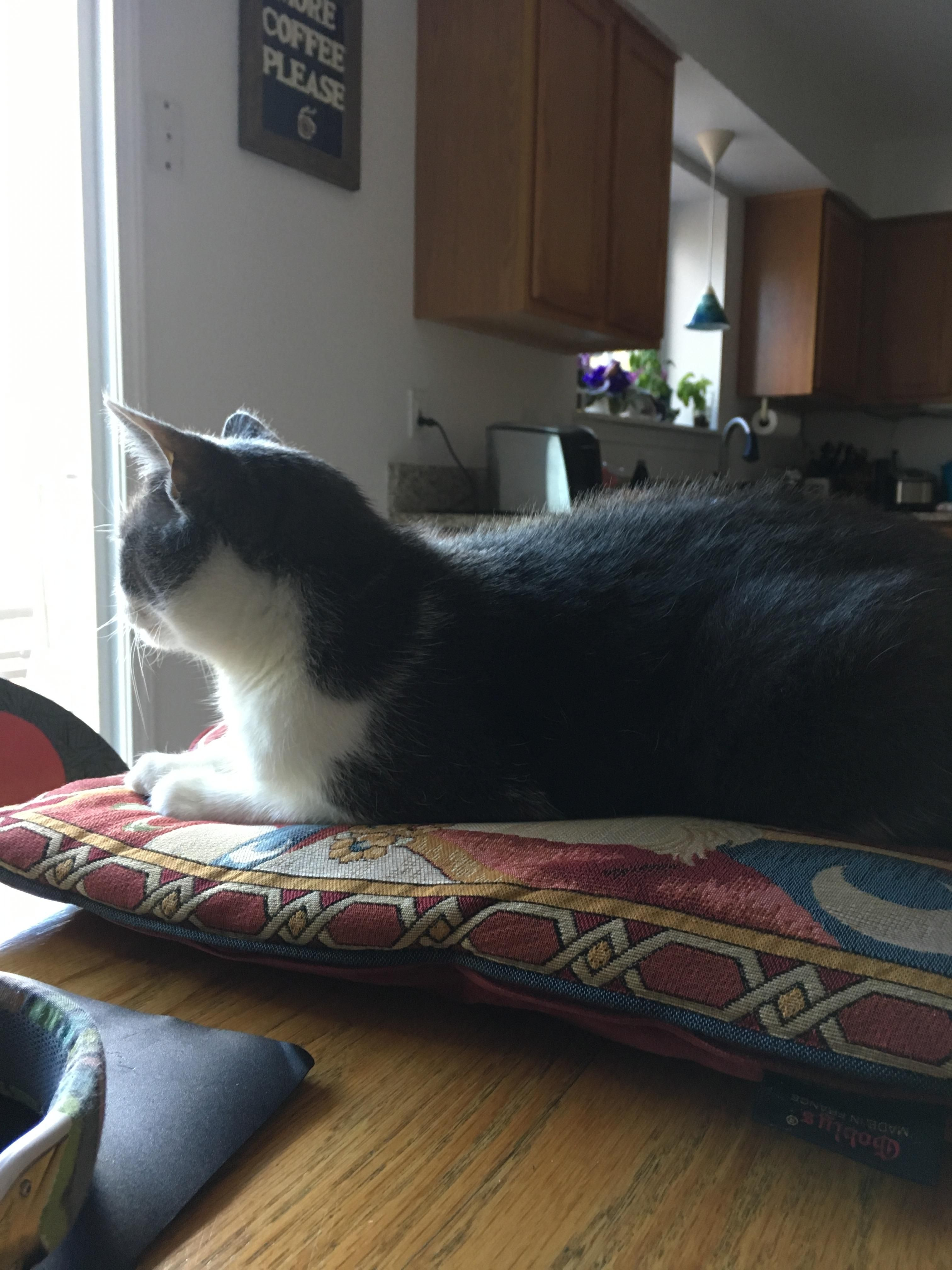 I put a pillow on the table so my cat could oversee my work. http://ift.tt/2pQDmyn