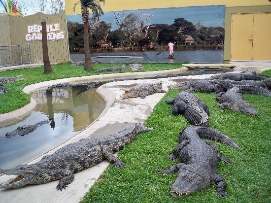 787b38c62c54e3a0de1683442a5c5541 - How Long Does Reptile Gardens Take
