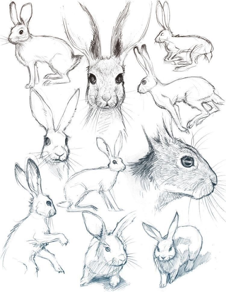 40 Free & Easy Animal Sketch Drawing Information & Ideas #sketchart 40 Free & Easy Animal Sketch Drawing Ideas & Inspiration –