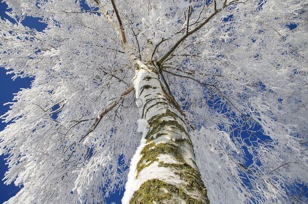 FineArtPrint.de - Community - Schneewelten Bild, Foto kaufen auf Leinwand, Tapete, Poster uvm.