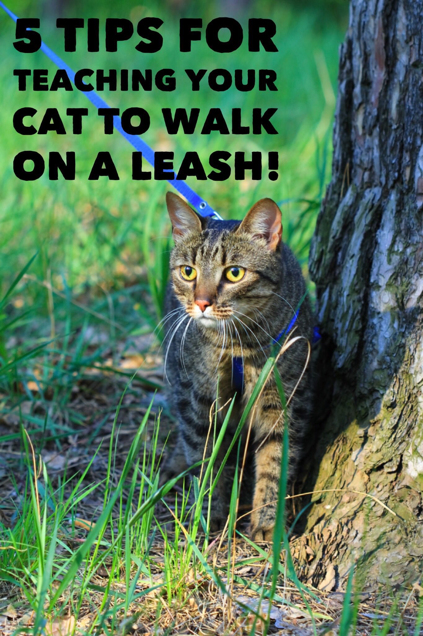 Think you can't teach your cat to walk on a leash? Think