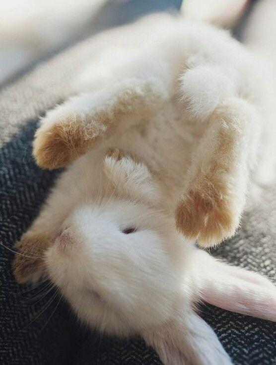 pin von manuela sammer auf animals pinterest s e tiere kaninchen und tiere. Black Bedroom Furniture Sets. Home Design Ideas