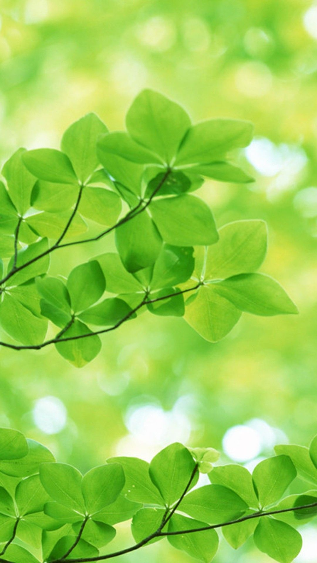 Nature Sunshine Green Leaves Iphone 6 Plus Wallpaper  Tree,
