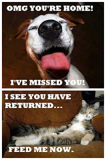 HAHA! SOOO true! Which is what makes me the total opposite of everyone ever bc THIS is why I love cats more than dogs!:P