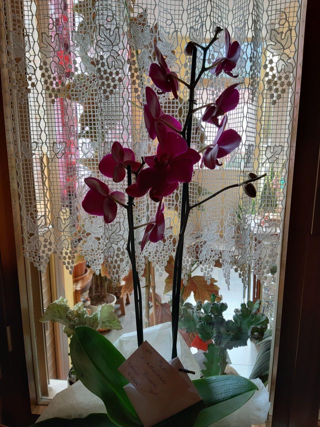 Pin di Simo Serra su fiori nel 2020 (con immagini)   Fiori