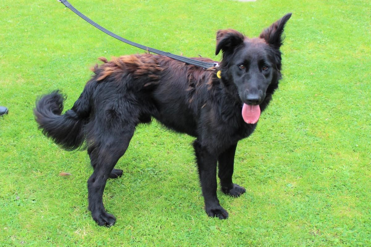 Pin On Dogs Gorgeous Crossbreeds In Rescue