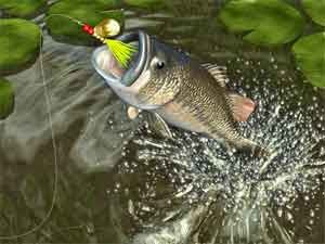 1000+ images about boat fishing on pinterest | fishing tricks, Hard Baits