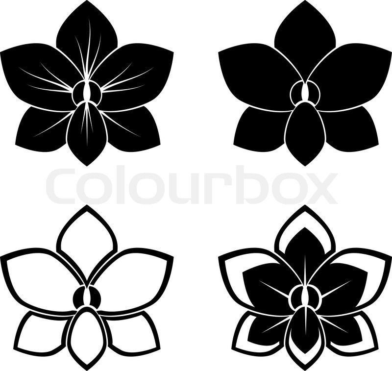 Orchid Vector T 236 M Với Google Orchid Tattoo Flower