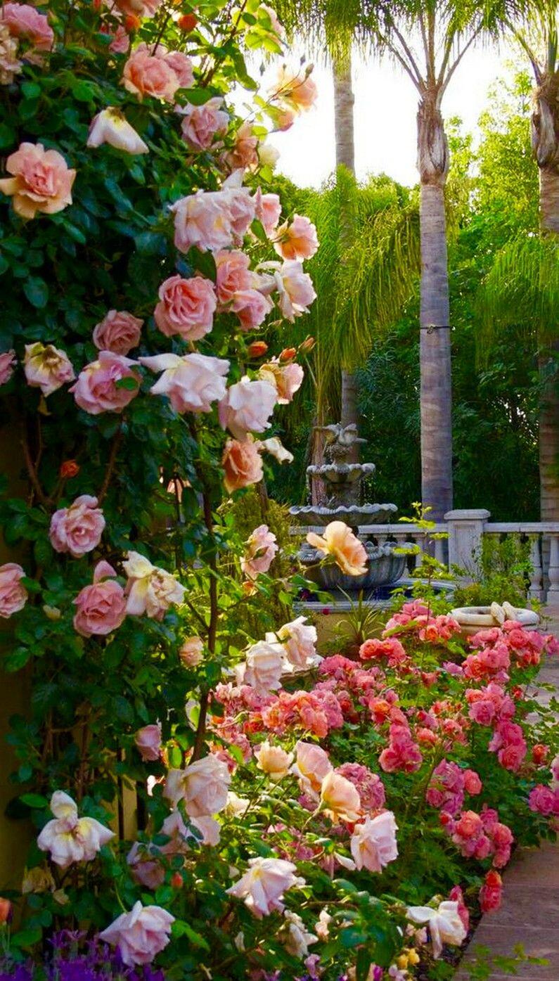 Climbing Flowers Jardins Et Paysages Pinterest Climbing