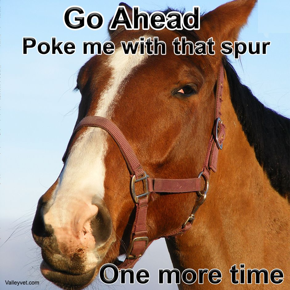 Valleyvetsupply Horse Quotes Funny Horses Horse Quotes