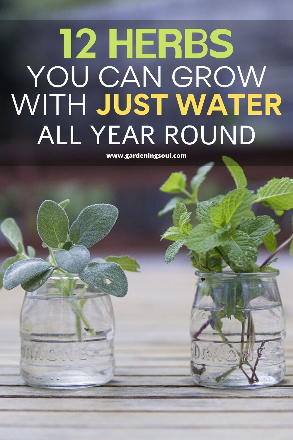 12 Herbs You Can Grow With Just Water All Year Round In 2020 Veg Garden Planting Herbs Growing Herbs