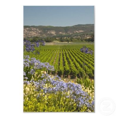 Google Image Result for http://rlv.zcache.com/vineyard_and_purple_flowers_photography_print_photoenlargement-rb53849badf7045d38771d5b2d5f109c6_fknq_400.jpg