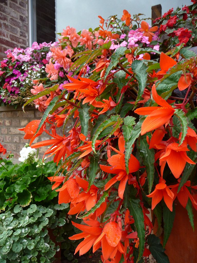All These Plants Can Be Used To Add Vibrant Colour And A Sense Of