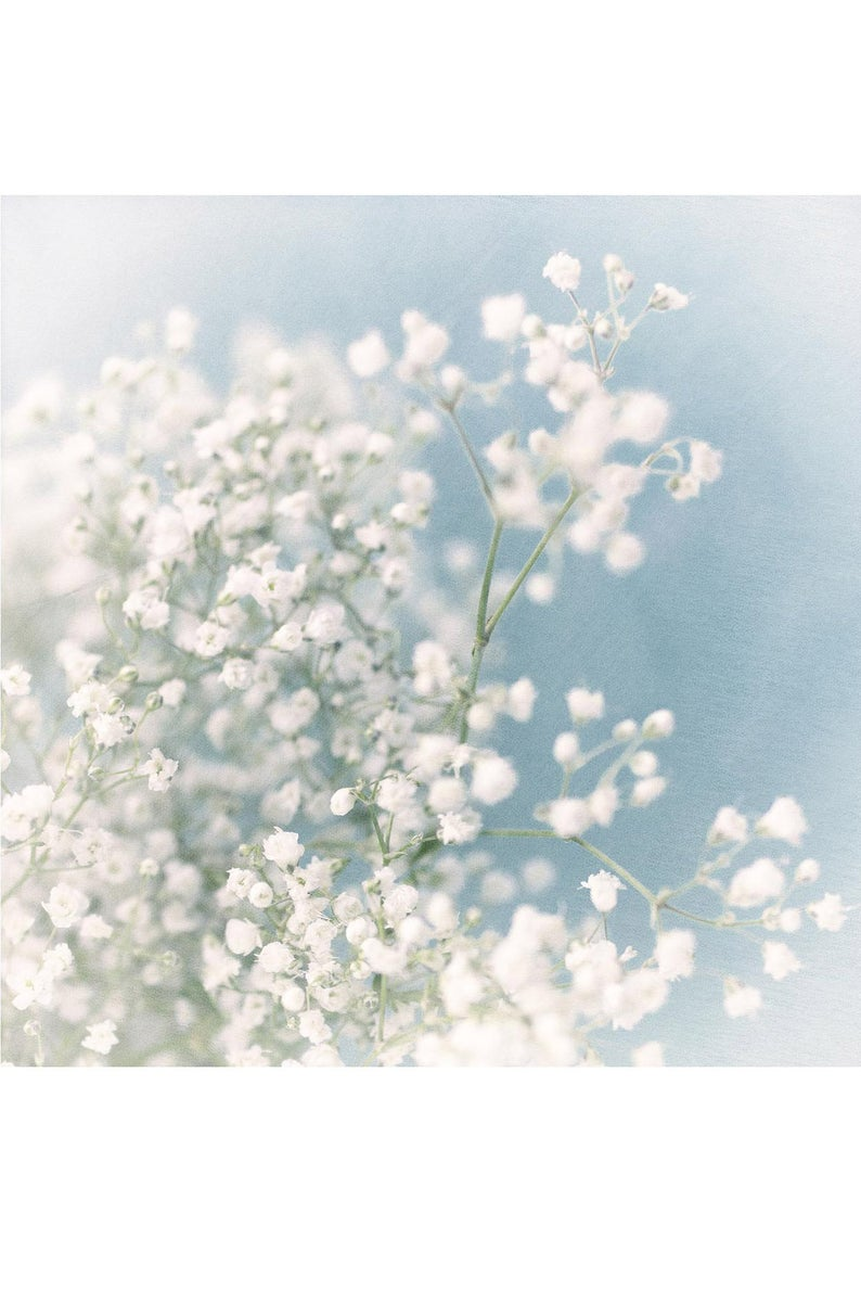 Baby S Breath Photograph Ethereal Flower Wall Art Blue Etsy In 2020 Flower Wall Art Floral Prints Art Daisy Art