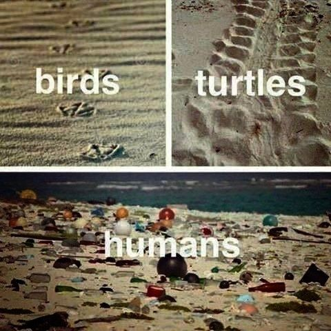 problem  Stillleben Biodegradable plastic false solution for ocean waste problem  Stillleben  graphisme écologie คณจะเลอกใหปาเปนแบบภาพไหน ในเมอคณเปนหนงในหมมวลมนษยท...