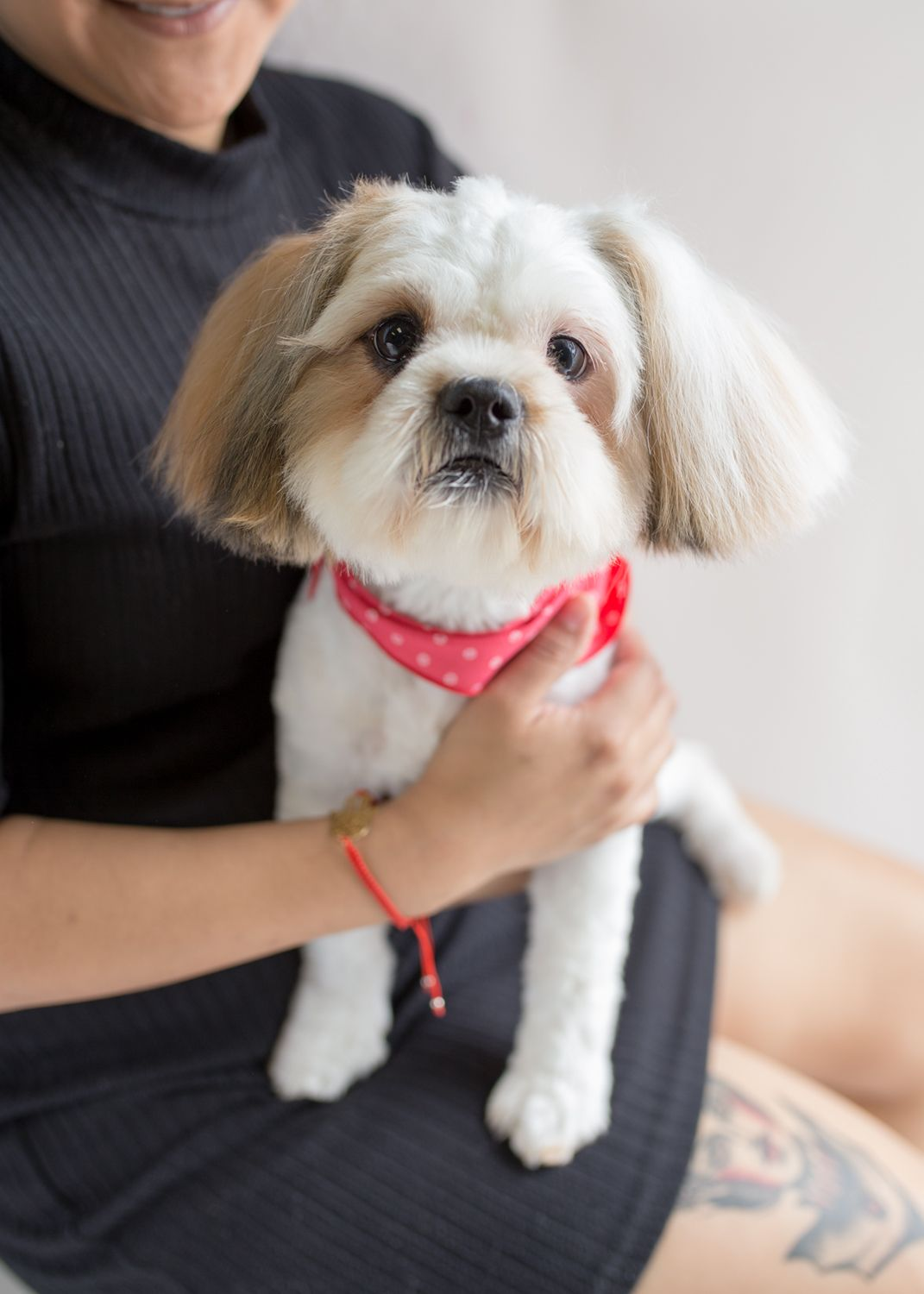 The Best Toy Dog Rescue South Florida And Description In 2020 Rescue Dogs Stop Dog Chewing Dogs