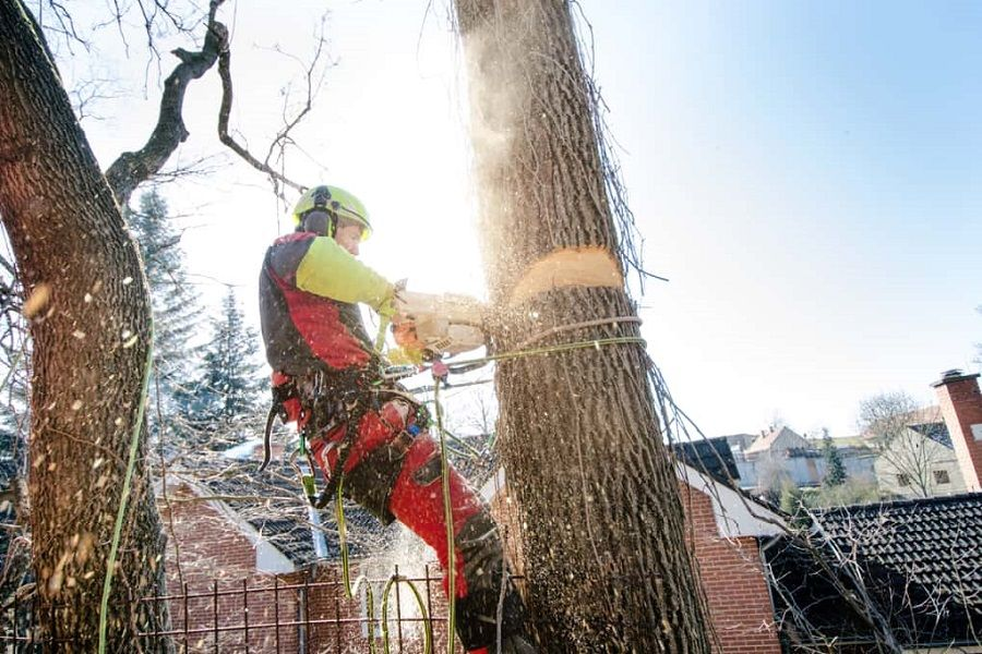 Are you looking for certified arborist Orlando FL? Then no ...