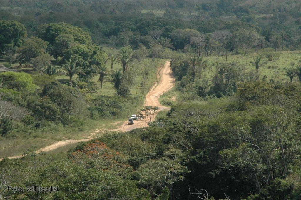 Los bosques tropicales secos se dan en regiones con una for Arboles que no pierden sus hojas en otono