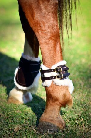 Italian Leather Horse Boots — Savara