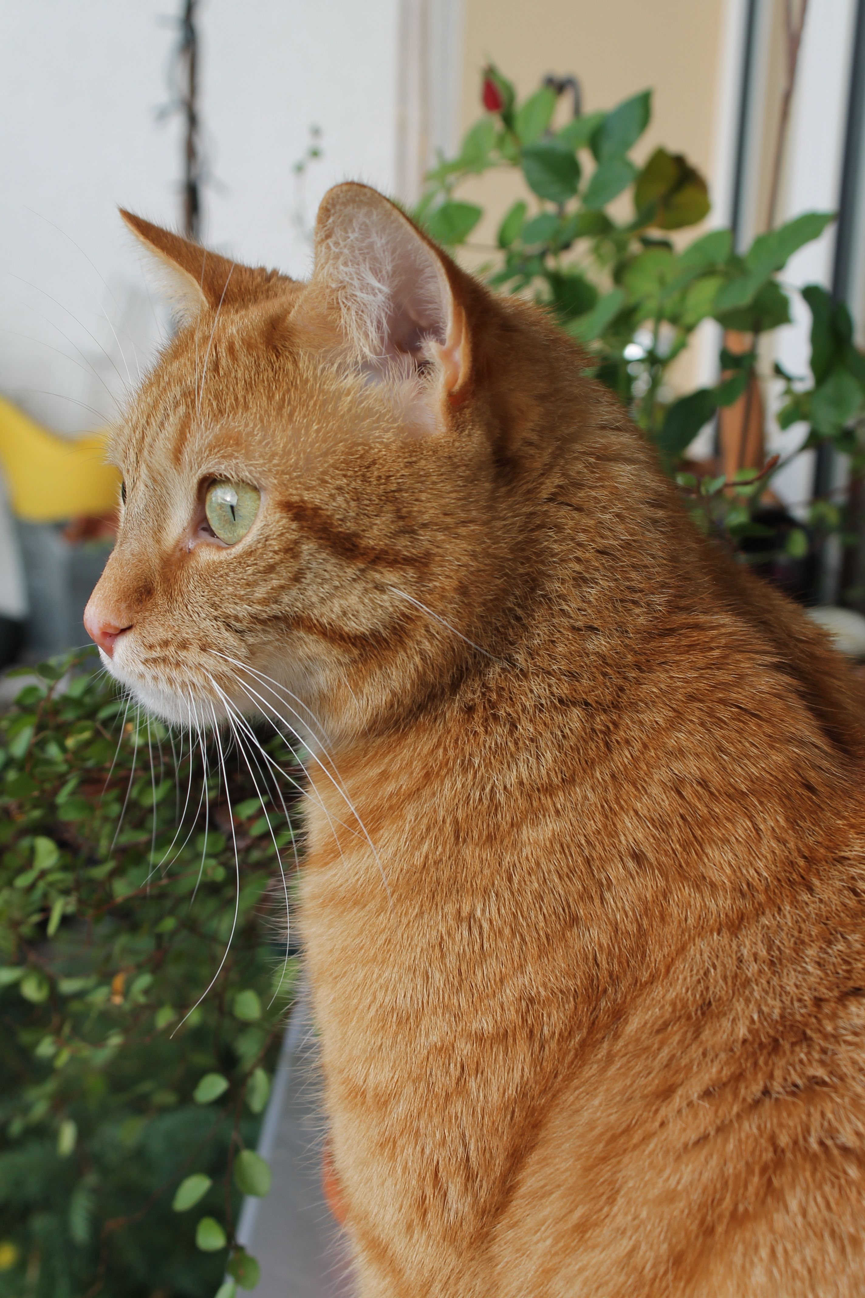 He loves bird watching & I love his green eyes! (Ginger