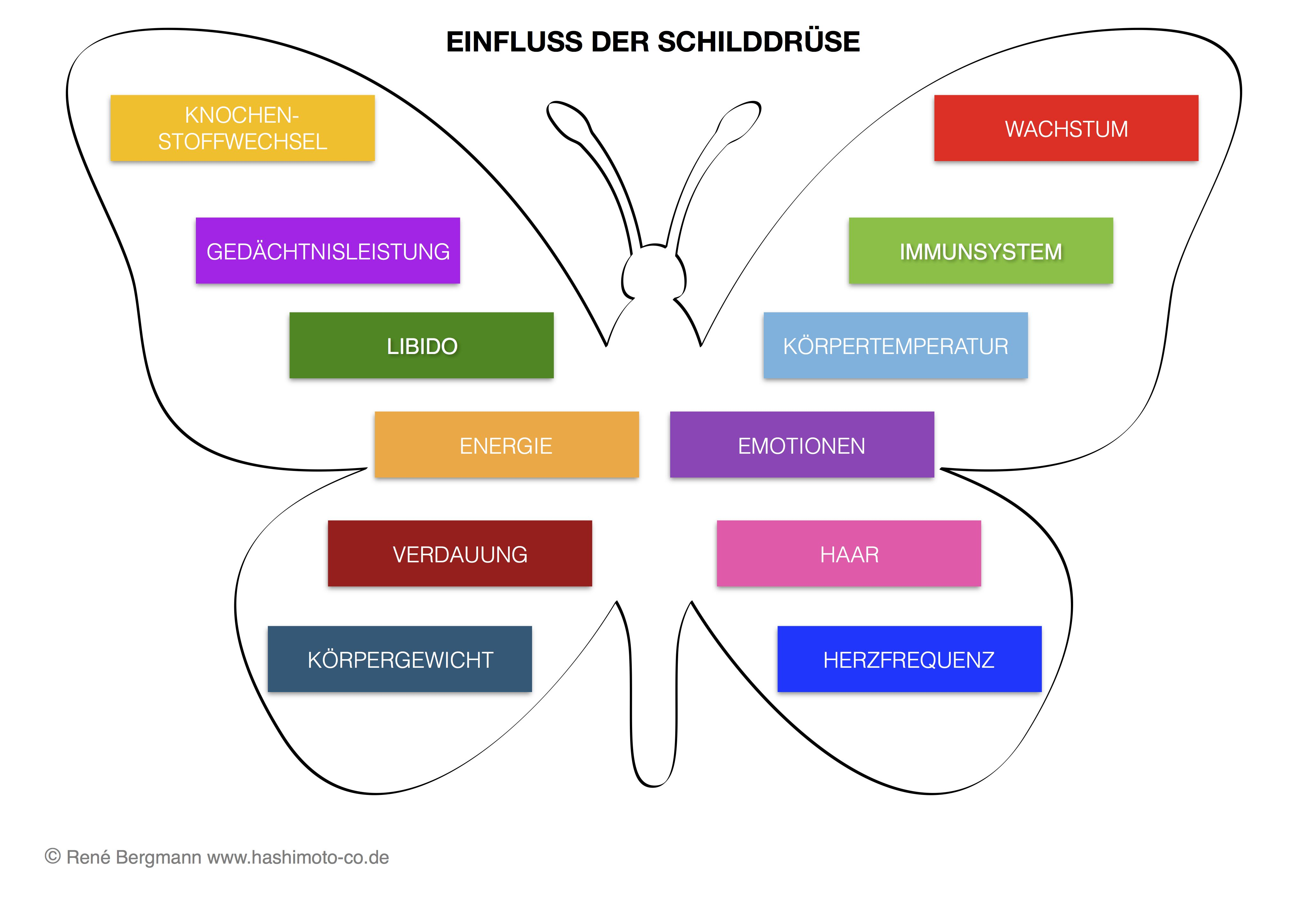 Hier ist ein Schema zum Einflussbereich der Schilddrüse abgebildet ...