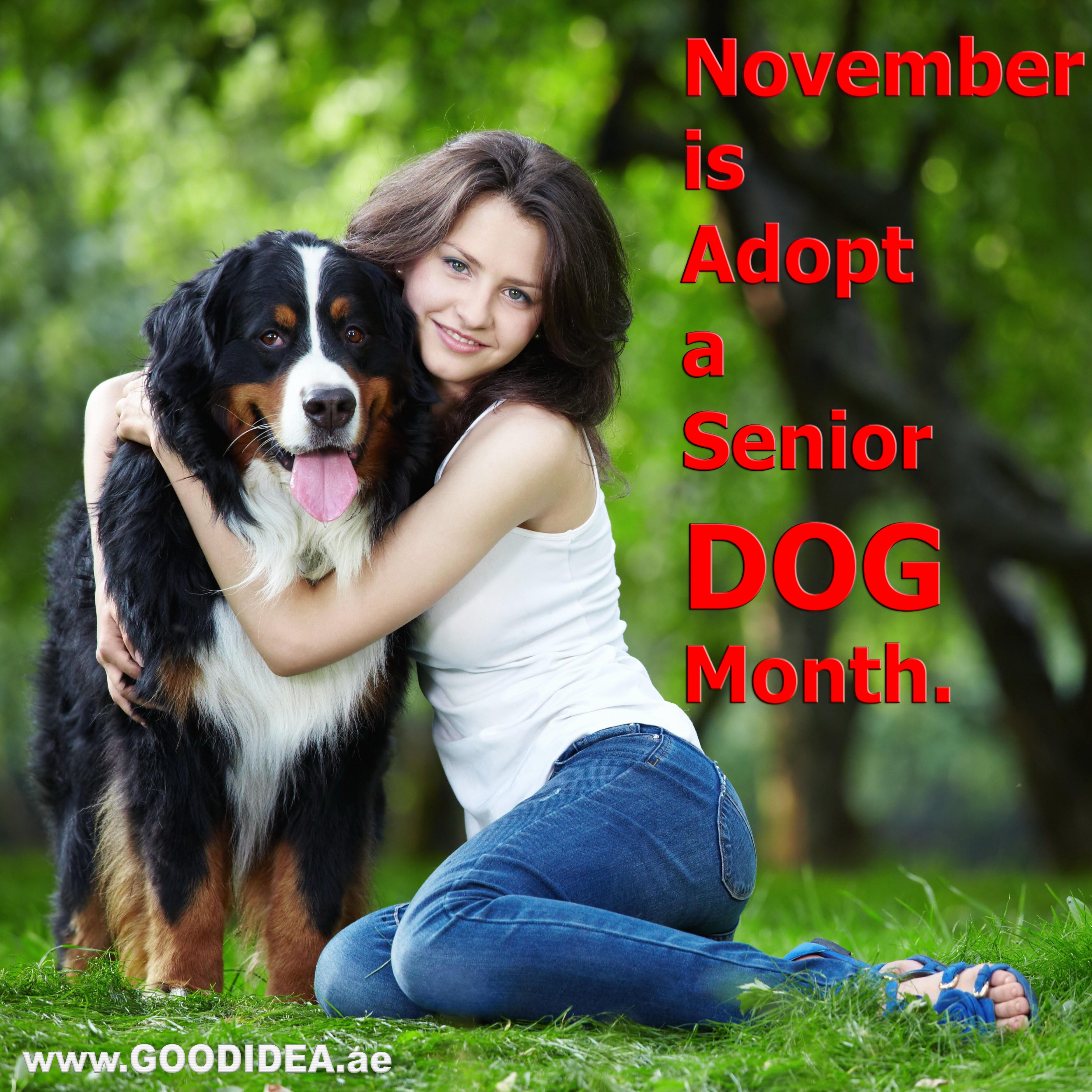 November is Adopt a Senior Dog Month. Share photos of your