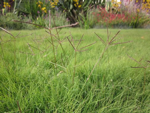 How To Get Rid Of Bermuda Grass In My Lawn