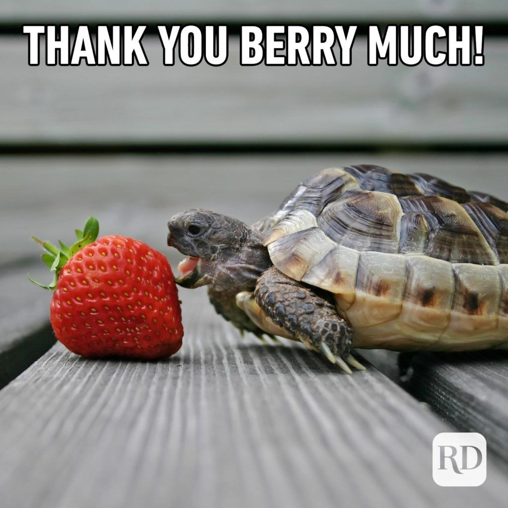 23 Funny Thank You Memes For Every Occasion Thank You Memes Funny Thank You Funny Puns For Kids