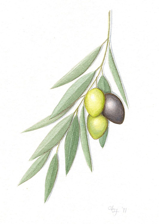 olive art - חיפוש ב-Google … | painting | Pinte…