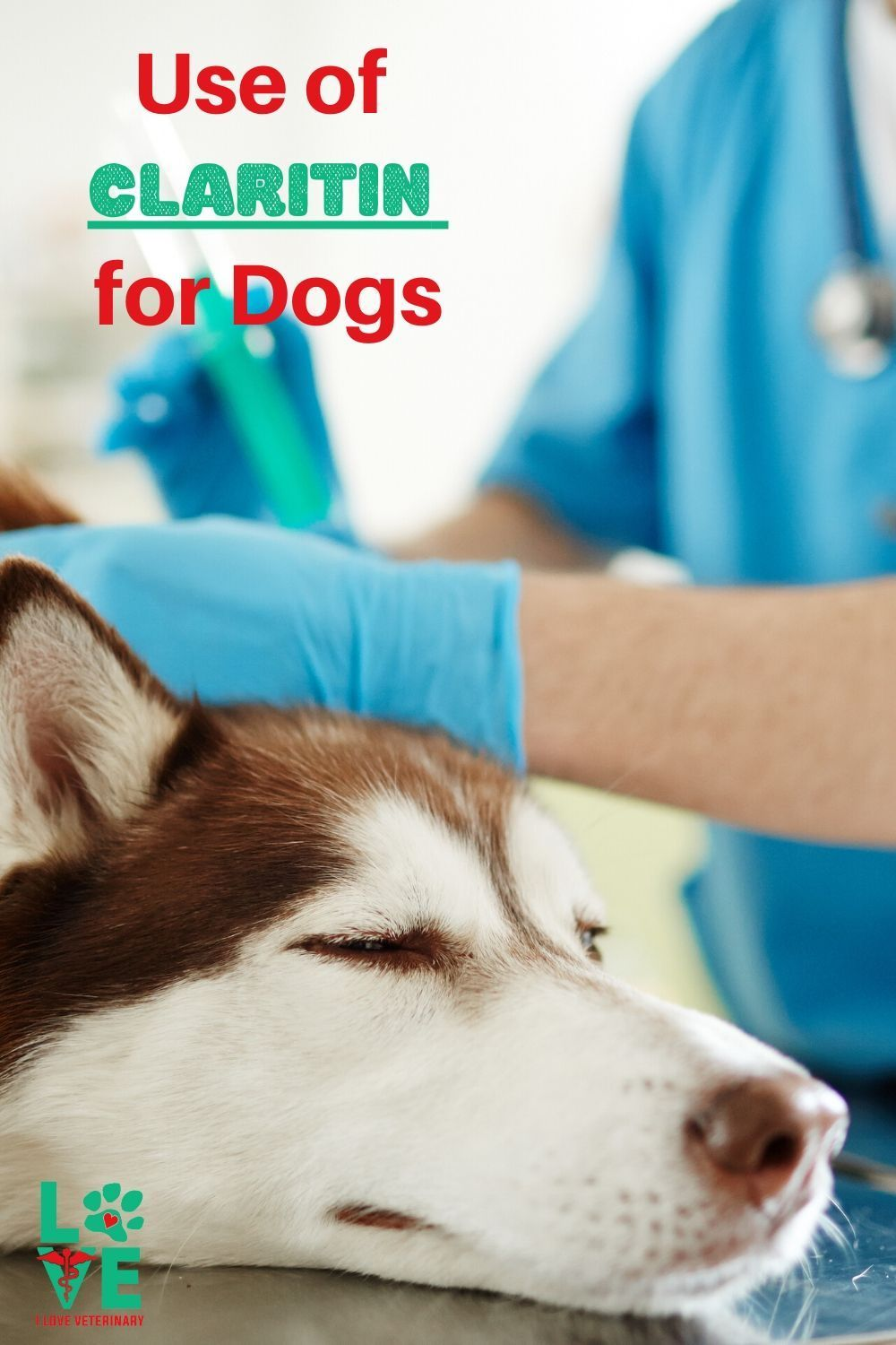 Can you use Claritin for dogs? I love veterinary in 2020