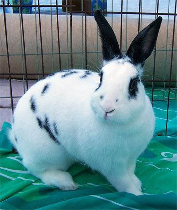 Rabbits Fermi Animal Shelter Pets Animals