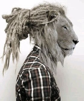 lion with dreadlocks hair is amazing!