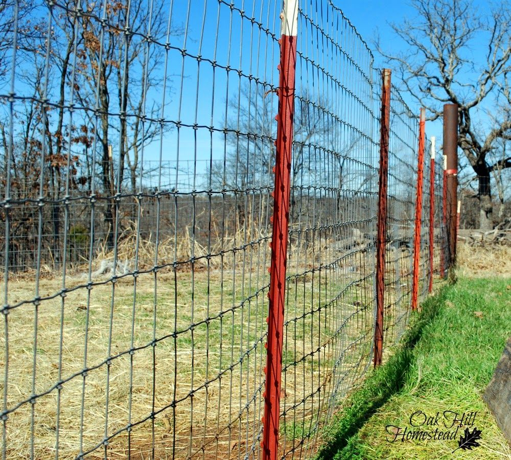 Goat Fencing that Works | Goat fence, Fences and Goats