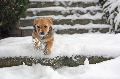 The Big Chill Tips To Protect Pets During Winter Weather Pets Puppy Cold Pet Care Tips