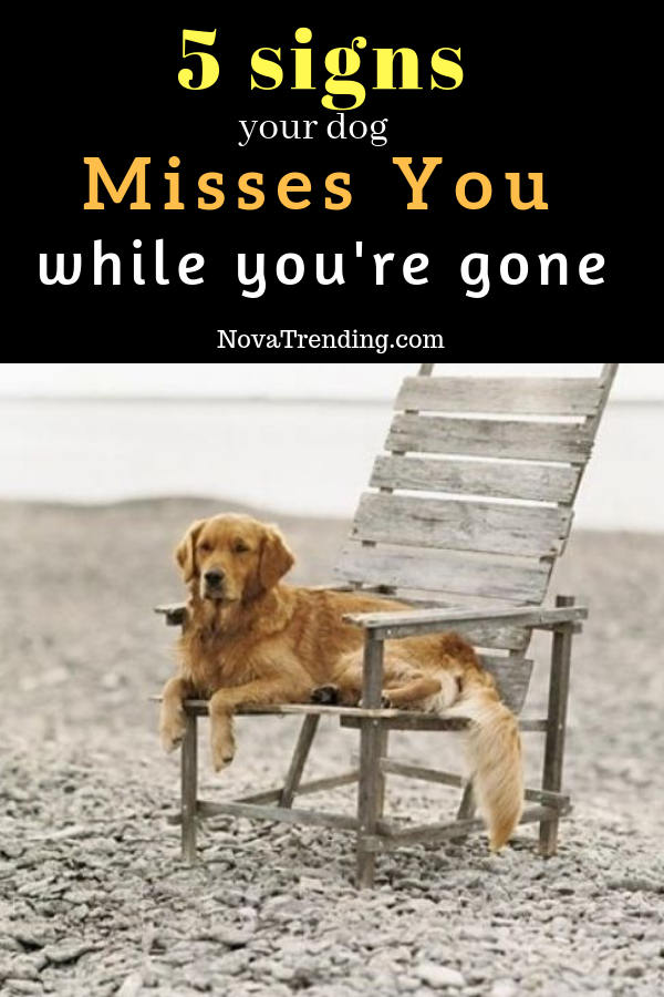 Top 5 Signs Your Dog Misses You While You Re Gone With Images Dogs Best Pet Insurance Dog Care Tips