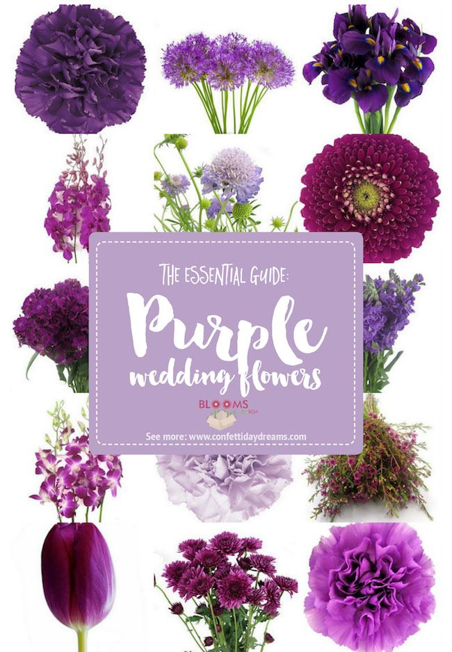 Complete Guide to Purple Wedding Flowers, Purple Flower Names + Pics ...
