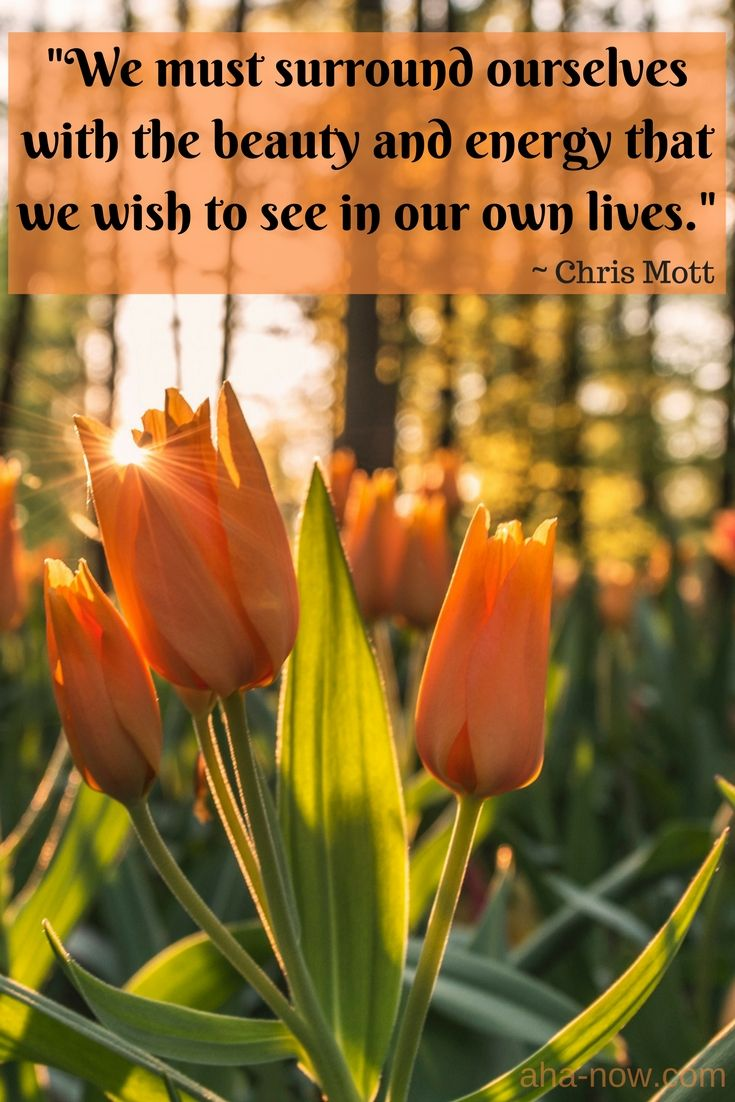 We Must Surround Ourselves With The Beauty And Energy That We Wish