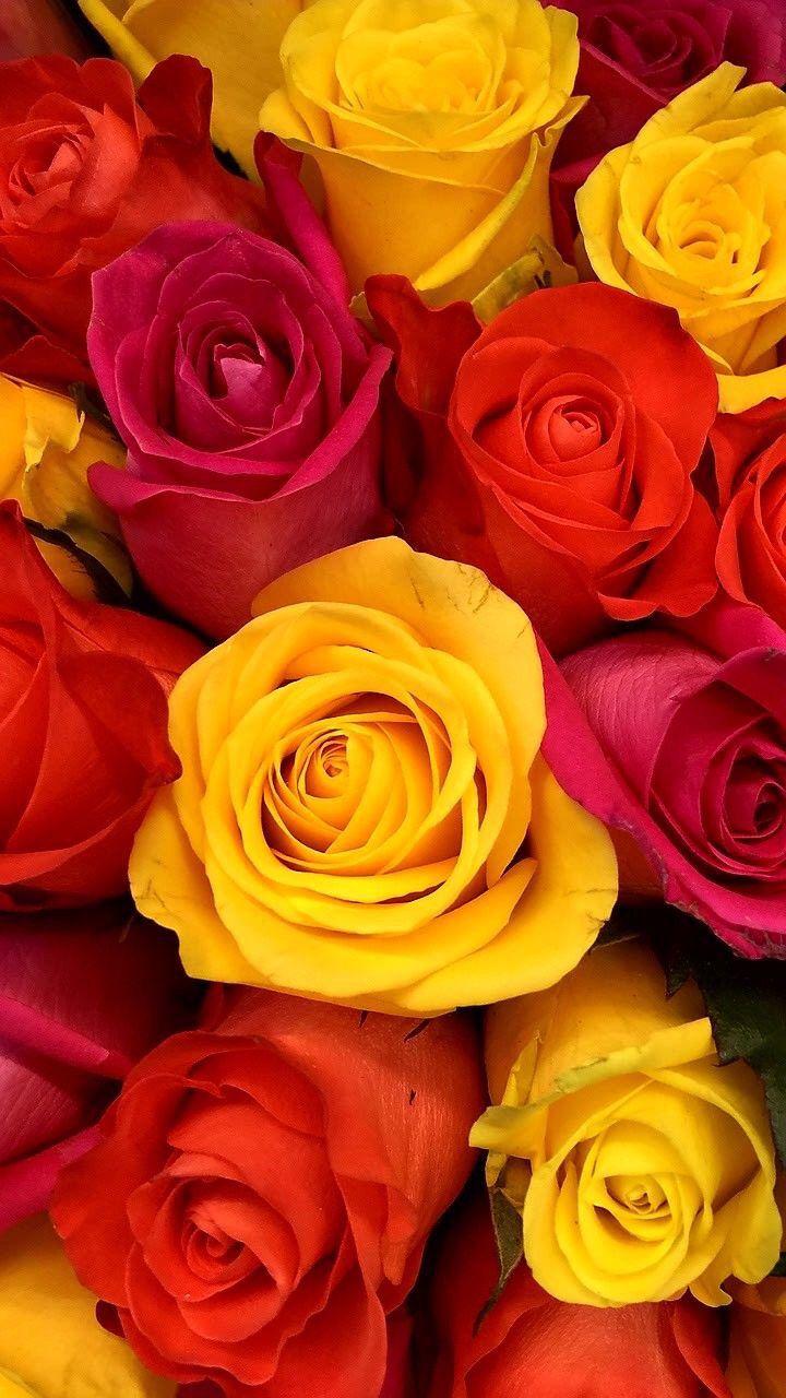 Pin By Rahela Drawings On Rose In 2020 Flower Iphone Wallpaper Rose Wallpaper Flower Wallpaper