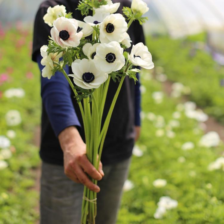 Anemone Black White Flower Farm Flower Farmer Anemone