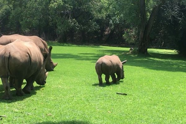 The rhino population has declined by ninety percent in the ...