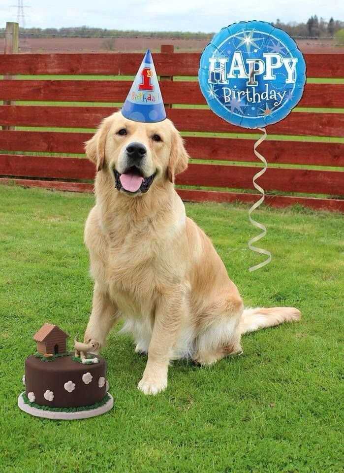 Golden Retriever Birthday 3 Happy Birthday Dog Dog Birthday