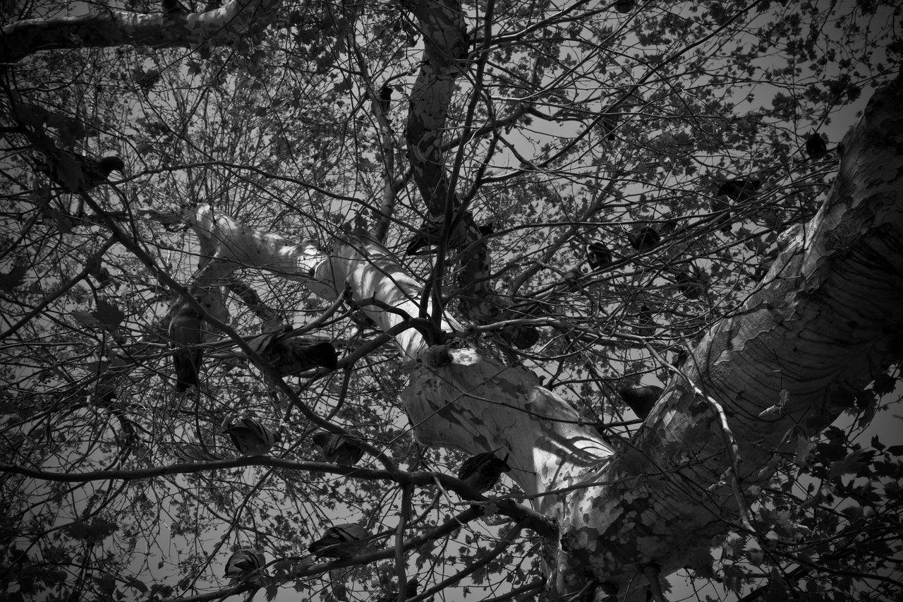 Monochrome birds by obenik.deviantart.com