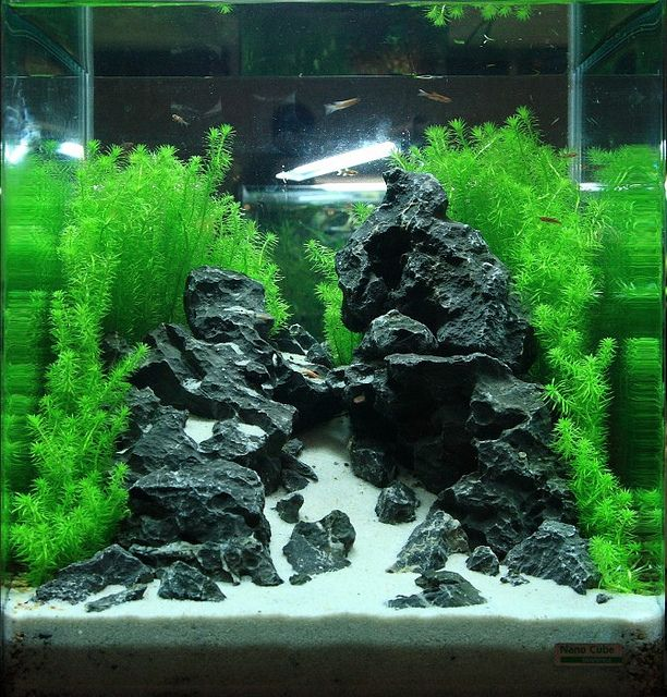 Good What To Do With A Cube... | AquaScaping World Forum