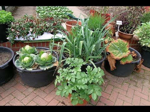Best Vegetable Grow In Containers गमल म