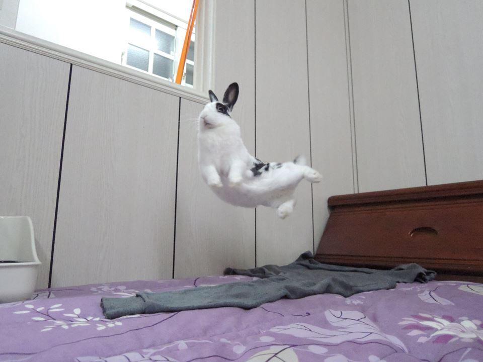 Binky Adorable Bunnies Pinterest Binky Bunny And