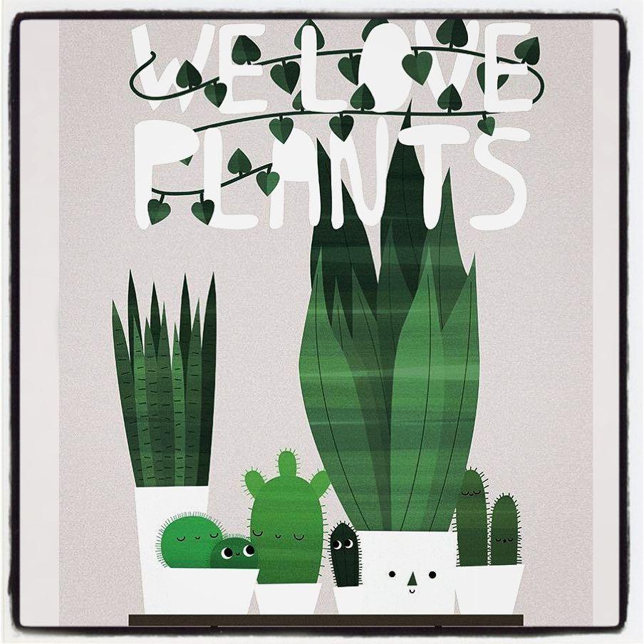 how to take care of mini cactus plants