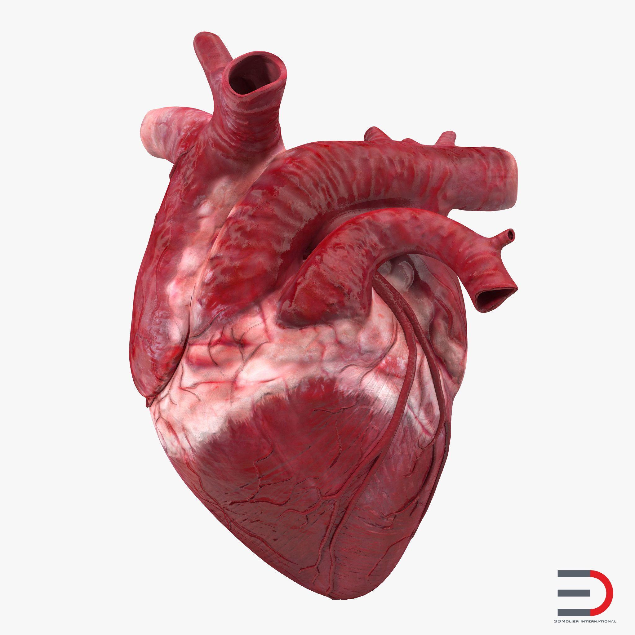 Картинка сердце органа