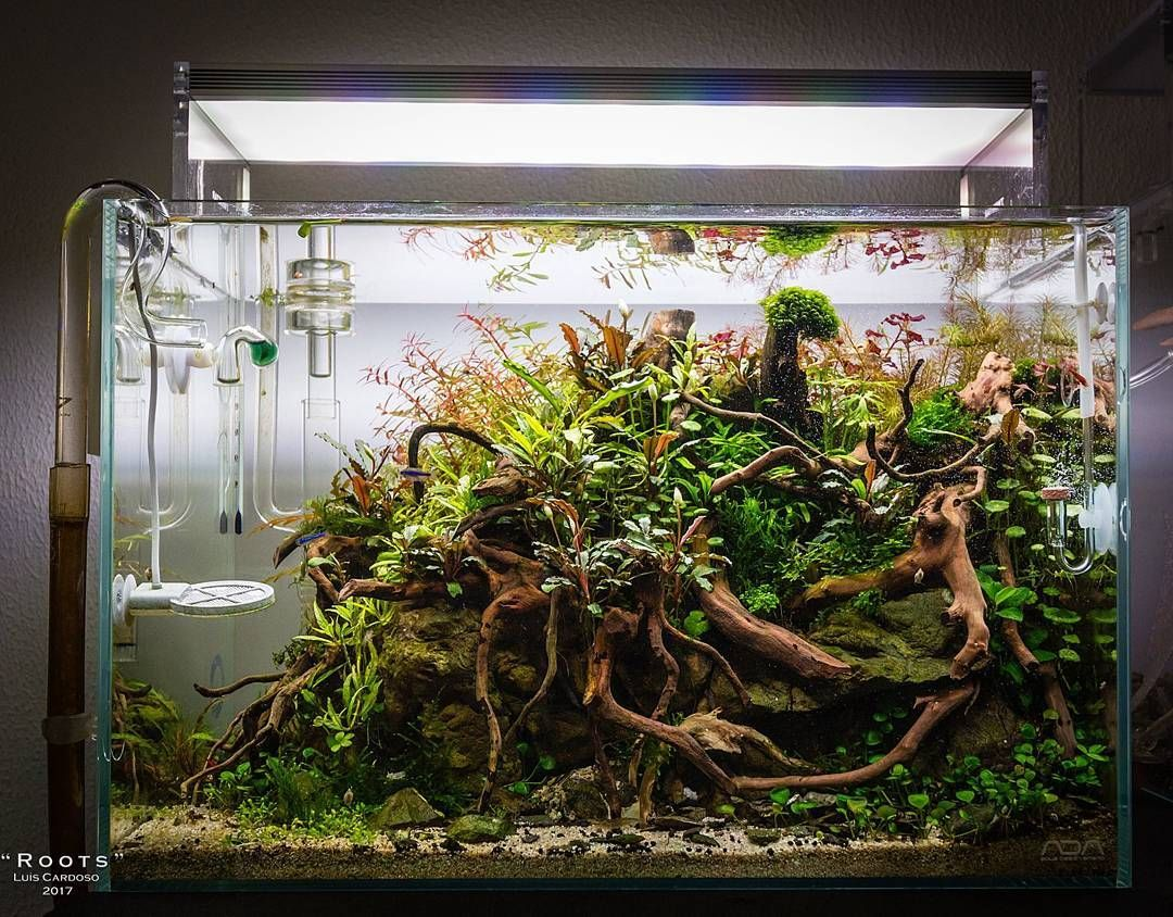 256 Likes 3 Comments Aquascape Aquascapenl On Instagram Such An Awesome Scape With Spiderwood Aquascape Aquarium Nature Aquarium Betta Aquarium