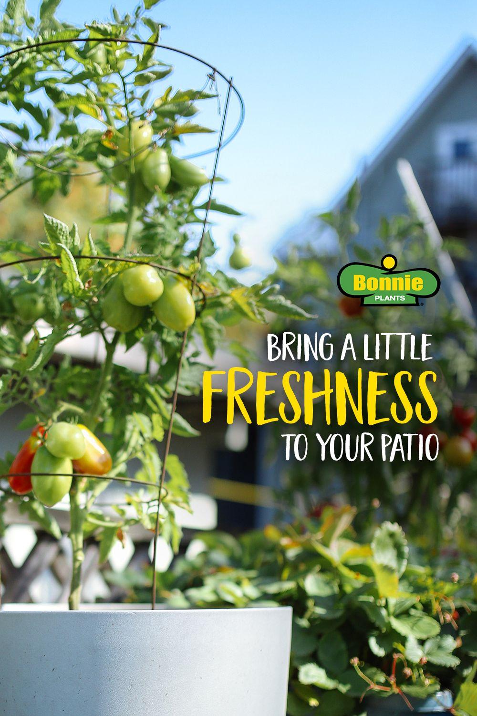 Deck Gardening & Creative Ways to Grow Herbs & Vegetables
