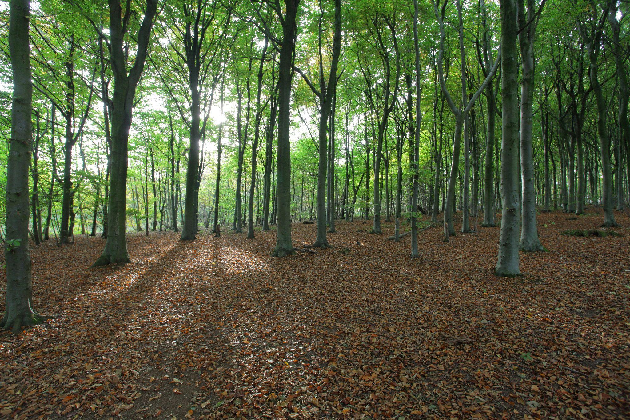 https://flic.kr/p/MQdSAR | Autumn Light | Sussex woodland in autumn  -  www.adamswaine.co.uk